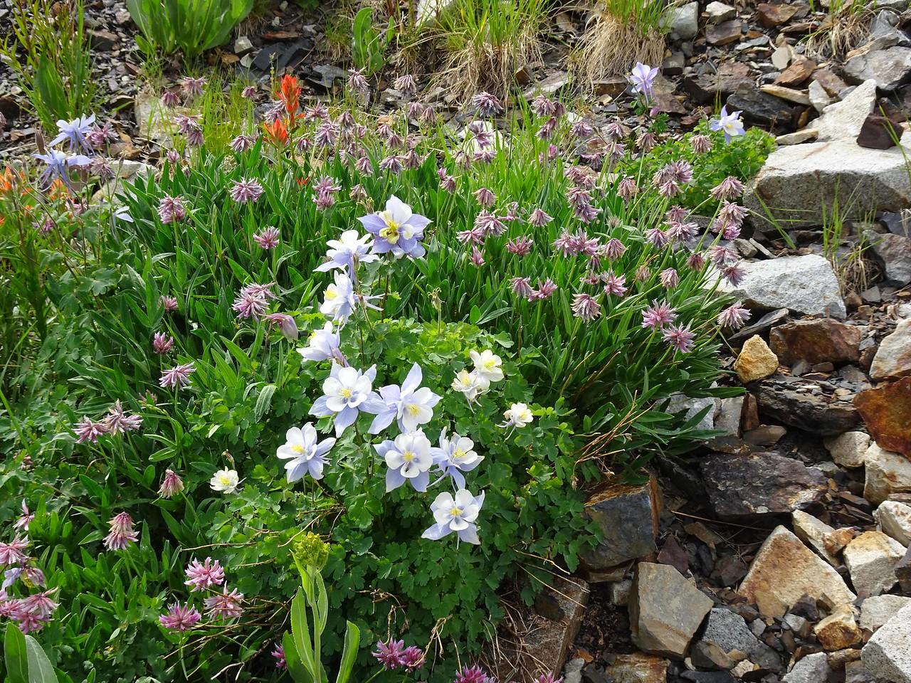 65 Flowers everywhere