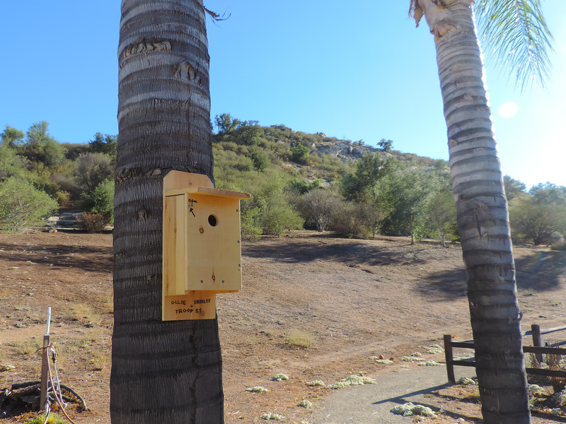 New Bluebird House