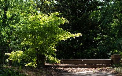 Durham_OldHouse_Steps_5272019