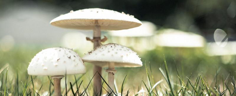 Durham_Mushrooms_Cover_852018