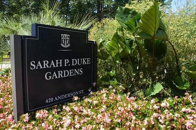Sarah P. Duke Gardens, Durham, NC, 7-31-2015