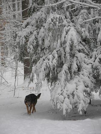 Hiking February 26 2008