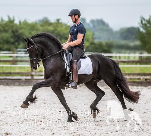 Dutch Friesian Stallions 2016