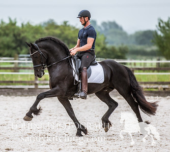 Dutch Friesian Stallions 2016