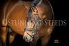 StunningSteedsPhoto-HR-1380