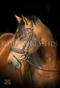 StunningSteedsPhoto-HR-1335