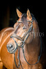 StunningSteedsPhoto-HR-1321