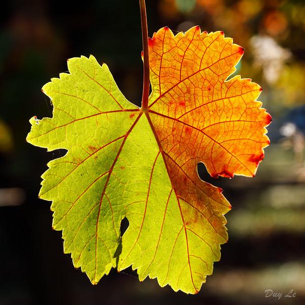 Leaf @ Fall Season