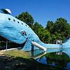 Blue Whale 7