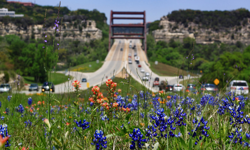 Bluebonnets And Pennies