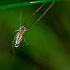 Edderkopp / Spider<br /> Fiskumvannet, Øvre Eiker 10.6.2018<br /> Canon 7D Mark II + EF 100mm f/2.8 Macro USM