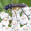Kjempe og dverg / Giant and dwarf<br /> Linnesstranda, Lier 15.7.2011<br /> Canon EOS 50D + EF 100 mm 2,8 Macro
