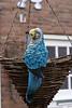 blue bird?