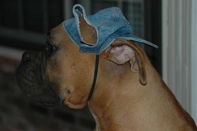 boxer05_0079