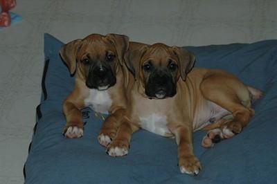 boxers_2004-0011