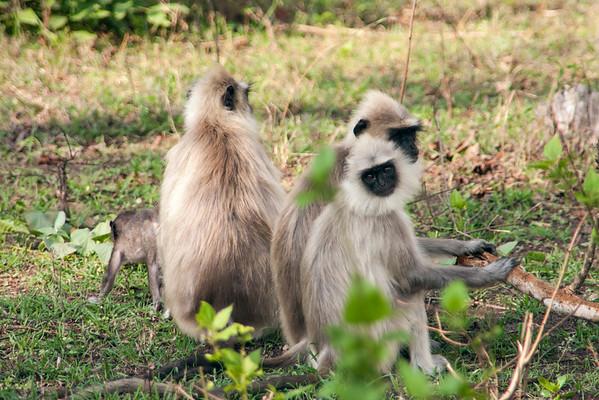 Bandipur National Park Safari