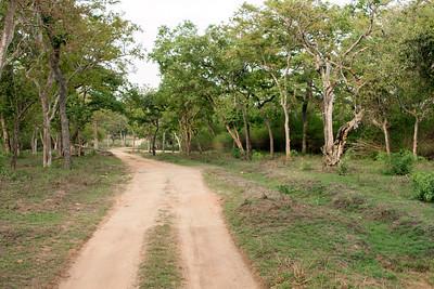 Jeep Trail