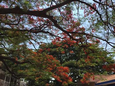Rando trees