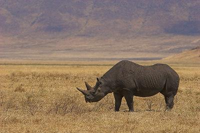 Ngorongoro Crater Black Rhino & Landscape