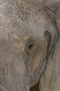 Masai Mara NR Elephant Eye