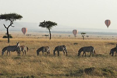 Masai Mara NR Zebras & Hot Air Baloons
