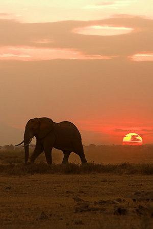 2006 E. Africa Safari - Days 8-9 (Amboseli N.P.)