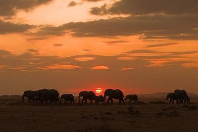 Amboseli NP Elephants and Sunset