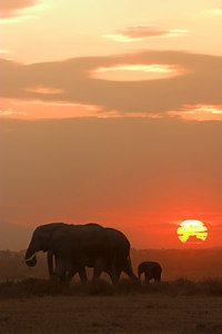 Amboseli NP Mother and Baby Elephant at Sunset