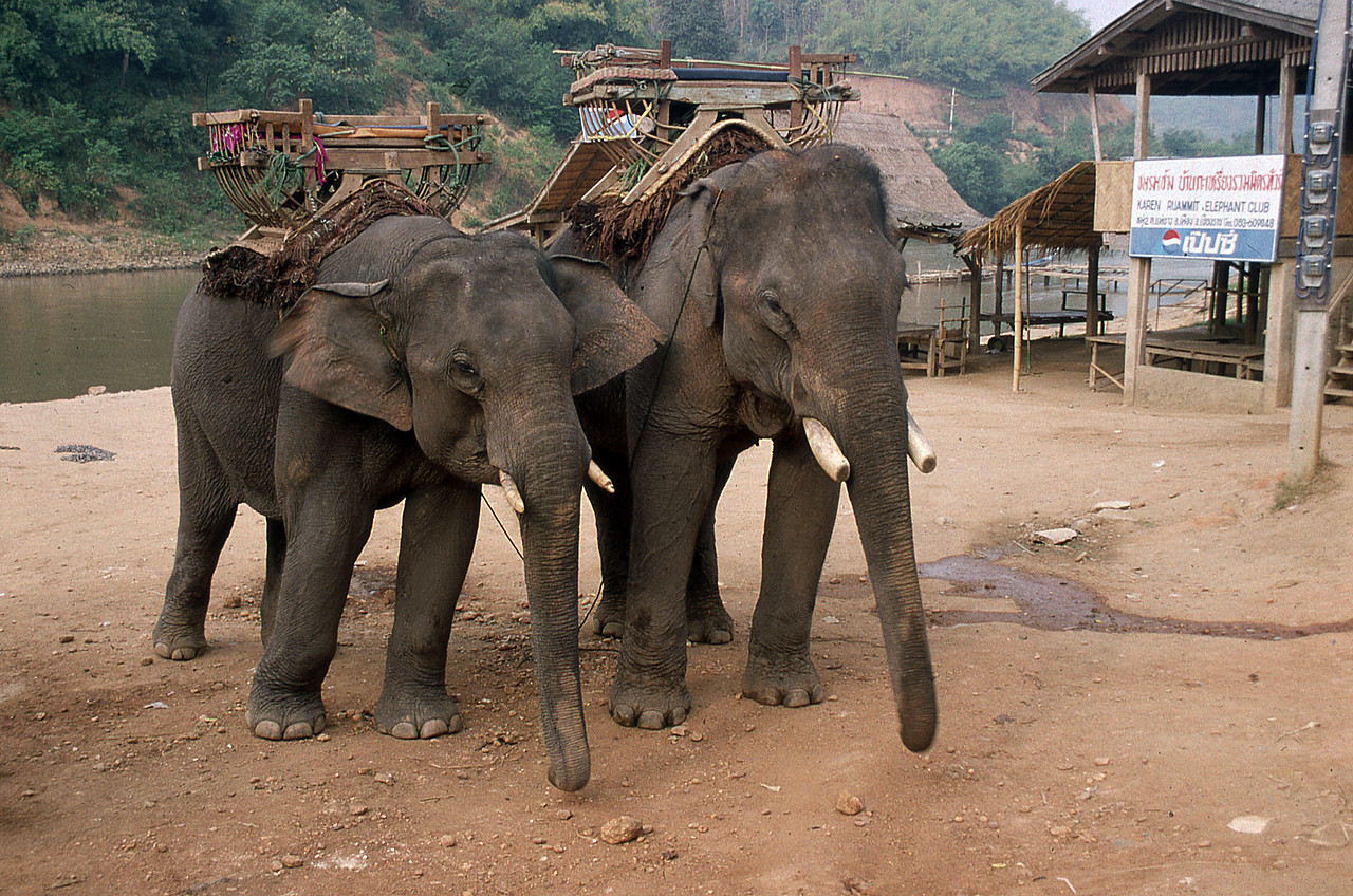 ELEPHANT CAMP - MAE HONG SON