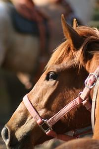 Day 2 colt starting 032