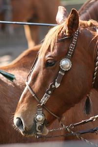 Day 2 colt starting 091