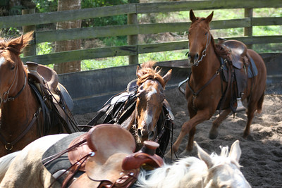 Day 2 colt starting 106