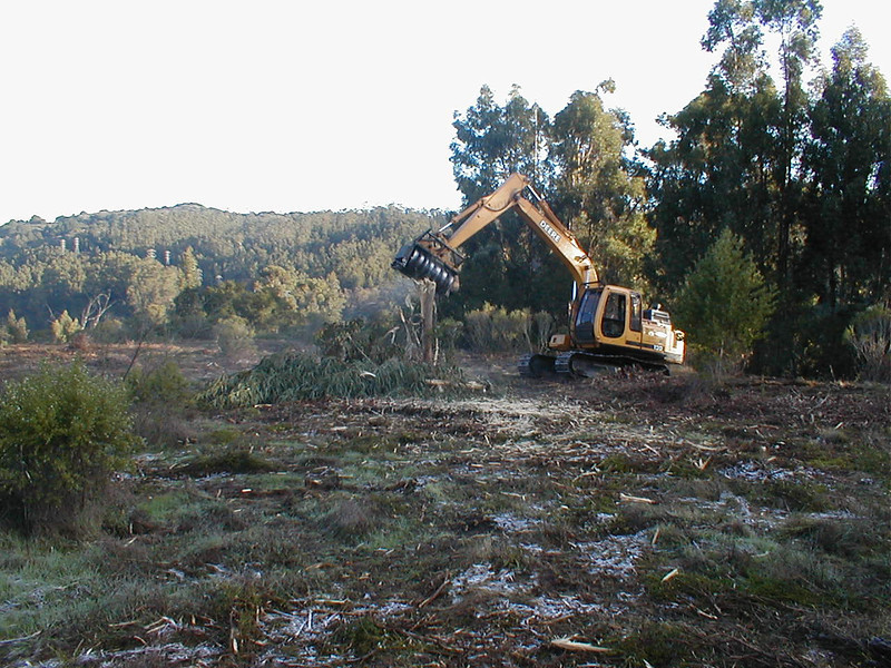 Brotosaurus  removing eucalyptus tree