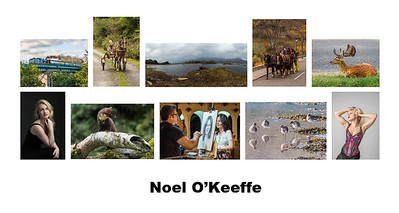 Panel Competition - First Place - Noel O'Keeffe