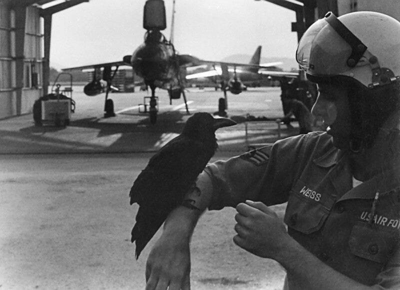"""Pre-Mission Final Briefing:<br /> <br /> """"Now, stay away from those intakes, avoid the engine exhausts, always keep your wingman in view, stay out of Laos, and no bombing of the dikes in the north"""".<br /> <br /> That's a Thud in shelter (F-105) with an EB-66 in the background.<br /> <br /> Takhli Thailand 1968-1969 Countermeasures troops ECM """"355"""" Tac Avionics"""