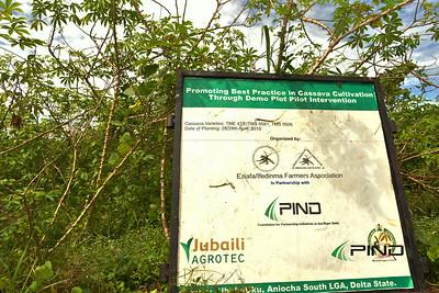 Cassava Demonstration Plot