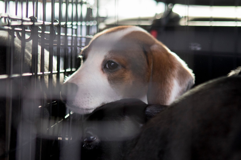 choco-pups2