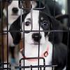 choco-pups3