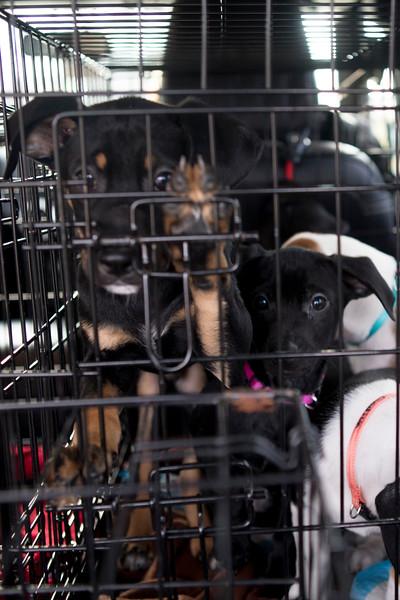 choco-pups