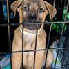 puppy14