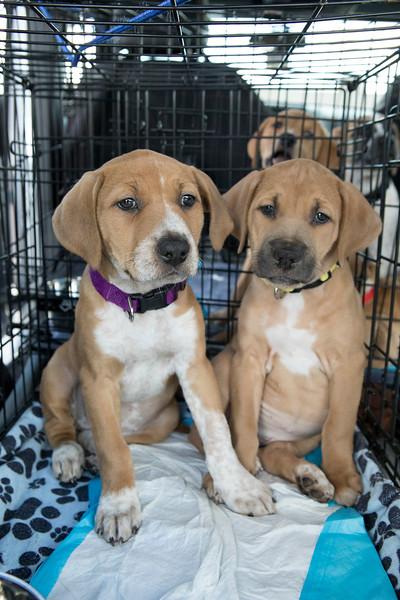 Puppies27