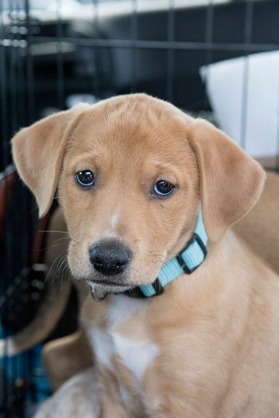 Puppies18