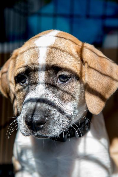 Puppies14