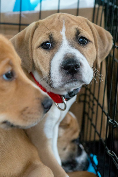 Puppies20