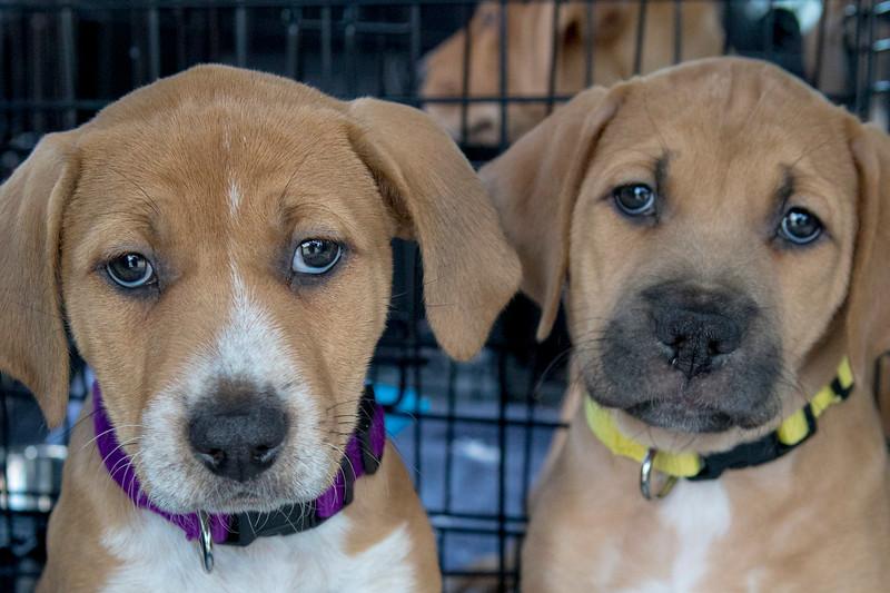 Puppies26