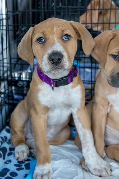 Puppies25