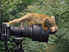 oxford-pete-squirrel-monkey-investigates-camera-amazonia-ecuador