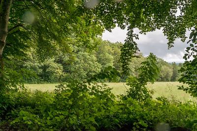 Vogelsberg, (Foto: Christoph Rau)