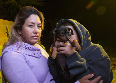 Teresa Arredondo,lf, stands with her son, Roberto,11, who holds one of his miniature pincscher pups in their backyard at their Bakersfield home on Mon. November 7th, 2011.