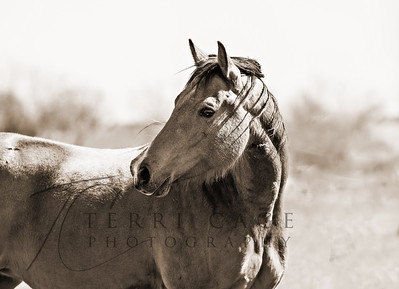 Equine Stock Images